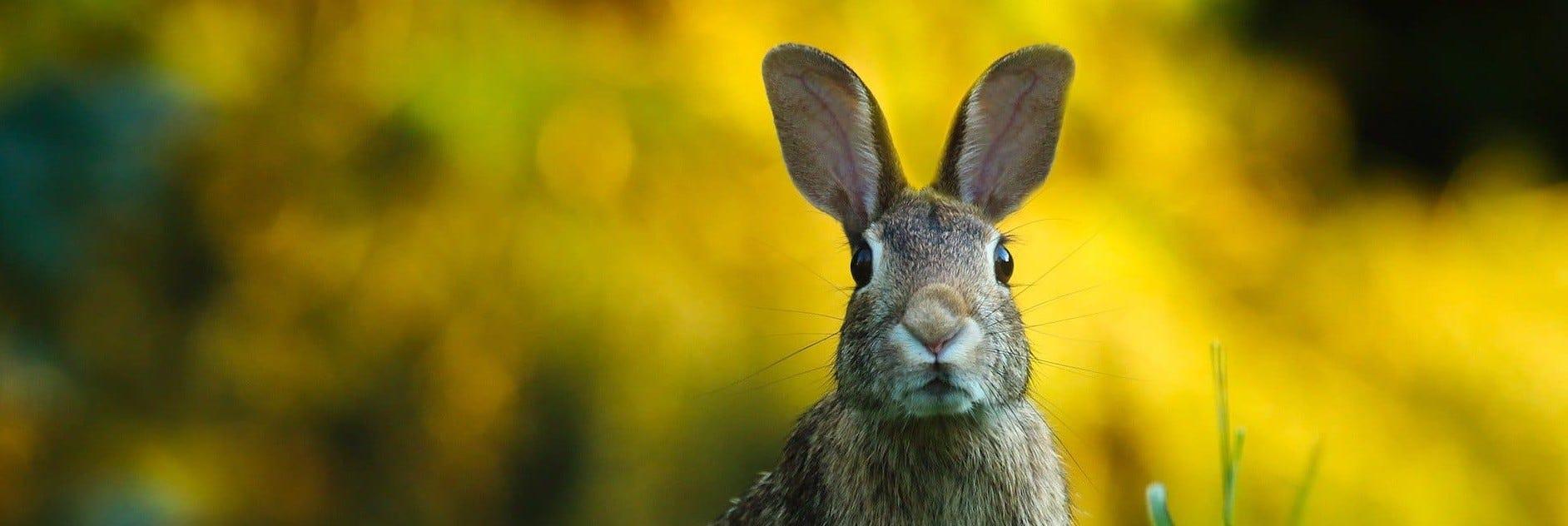 Alimentation et équipements lapins