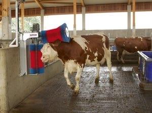 brosse à vache électrique