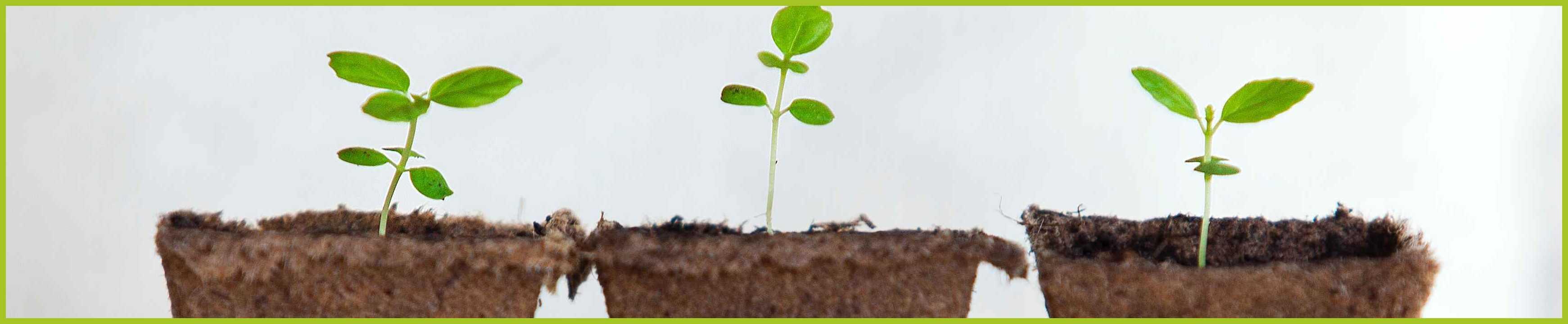 pousse de plante nature