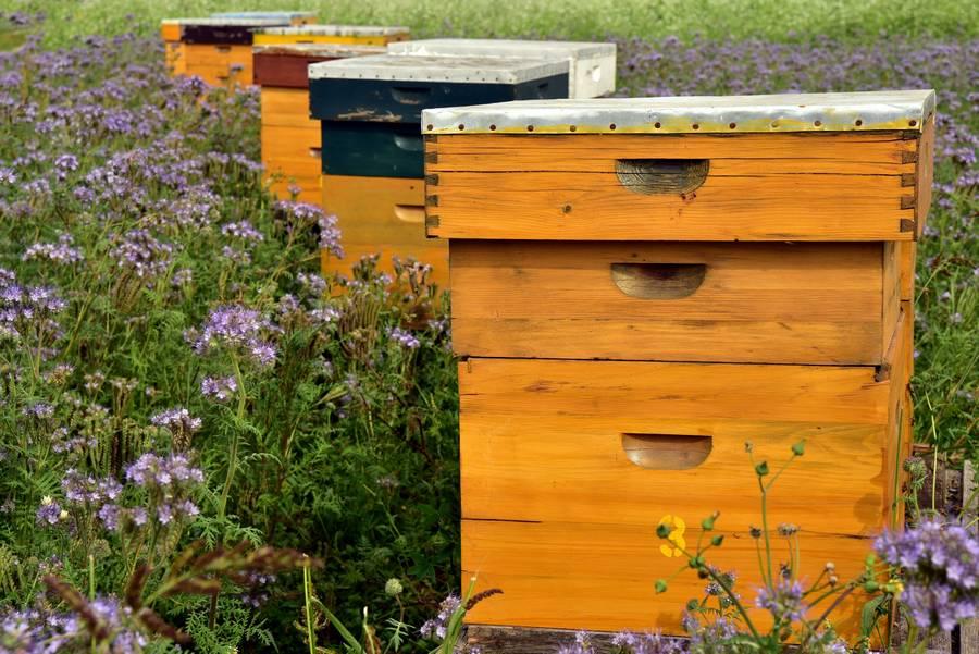 installation ruche